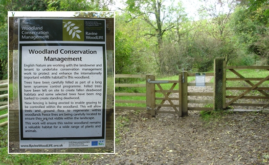 The new Woodland Conservation Management sign, fence and stile in Monsal valley