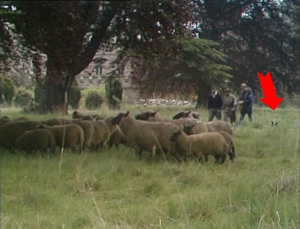 A sheep dog sits only partly-hidden in the grass